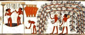 "The Wine ""process"" in ancient art: harvest, pressing, placing in vases"